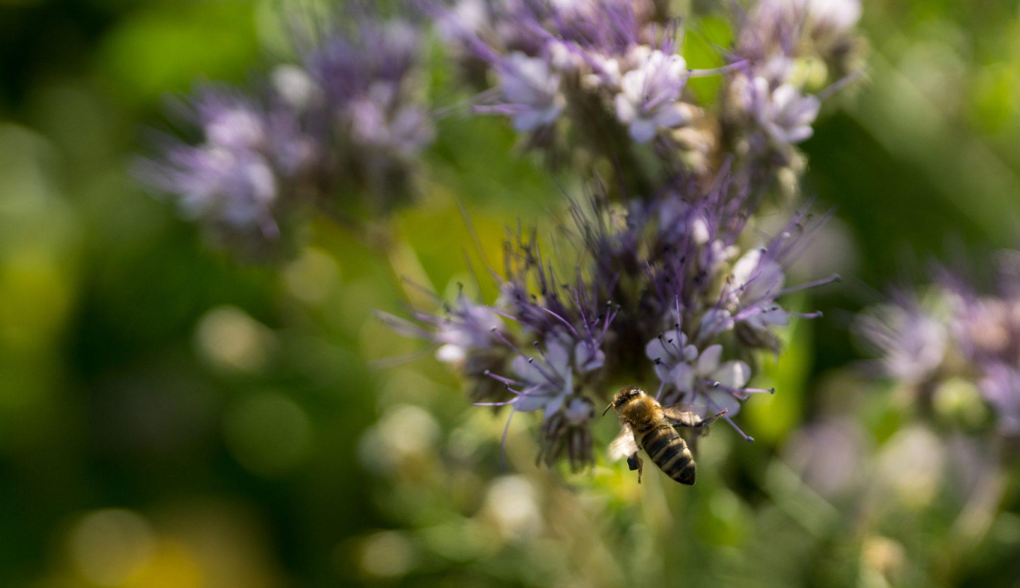 Blumen für Bienen